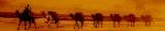 camels920x1801.jpg